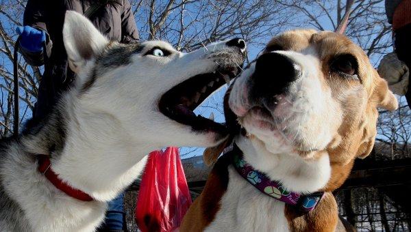 Чушь собачья… Налог и регистрация домашних животных